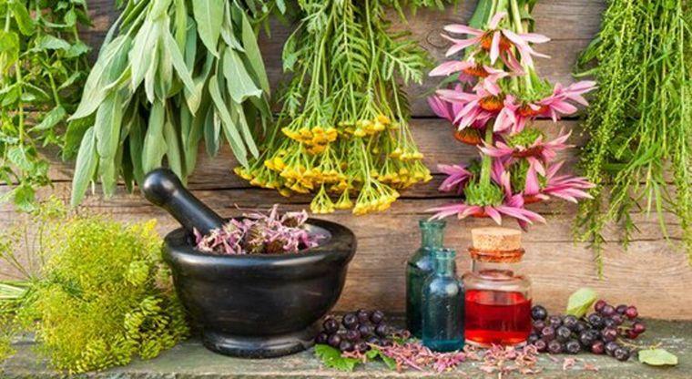 Normas gerais para a colheita de ervas medicinais