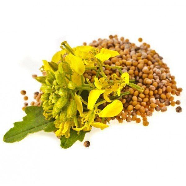 cultivar mostarda