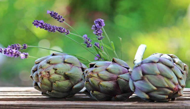 Alcachofra usos medicinais