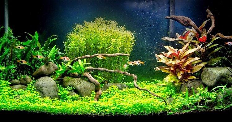 Como podar plantas de aquário.